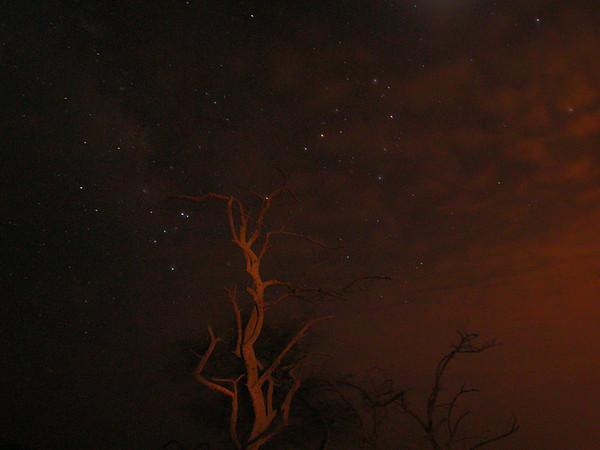 Scorpio and Tree