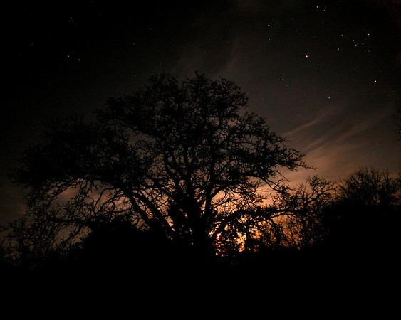 Moon Rise and Stars Above old Oak Tree