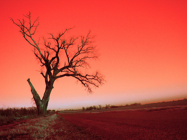 Roadside Tree in Red