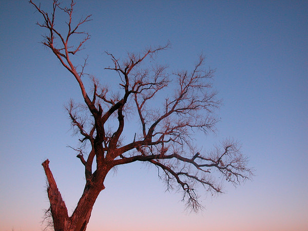 Roadside Tree in Light of Sunset