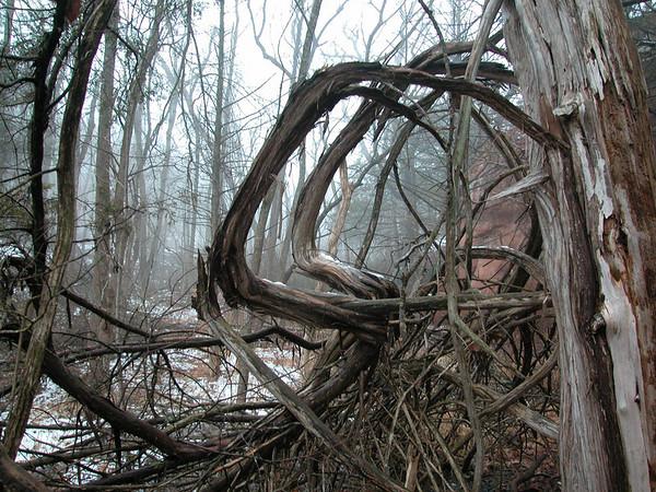 Wild West Roots