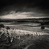 Denbies Wine Estate, Dorking, Surrey