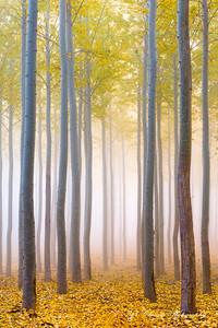 Boardman Tree Farm , Oregon