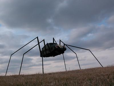 Bug of Beatle