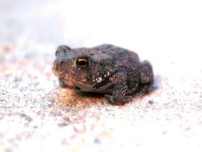 Toad Sitting on Fist