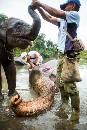 Caretakers bathe a mother and baby Sumatran elephant near the village of Tangkahan