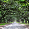 Wormsloe Plantation, Georgia. 2014