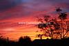 Desert Sunset - #1