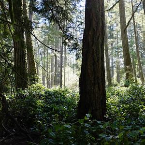 Metchosin, Vancouver Island, BC. 2015.