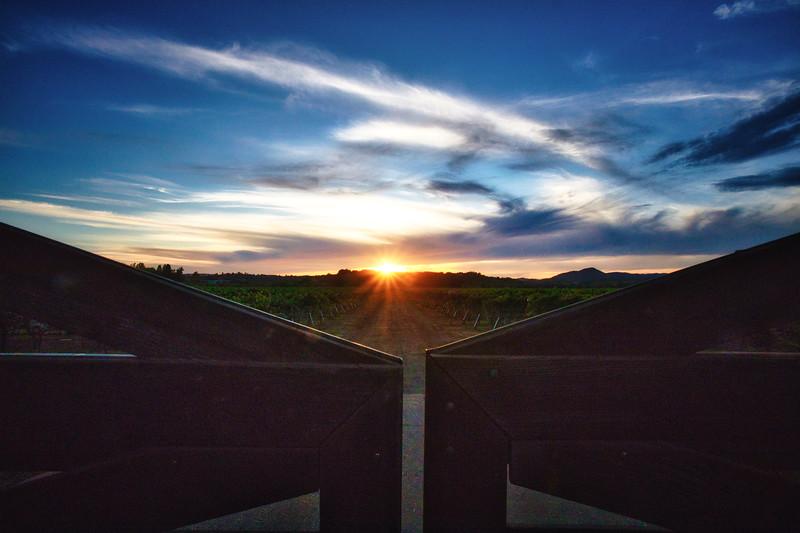 Autumn Sunset Vineyard II