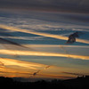 Sunset Bodega