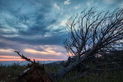 Fallen Tree at Sunset