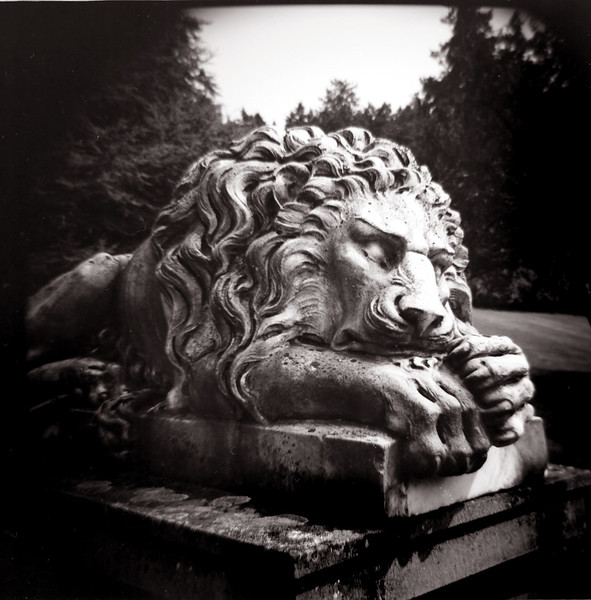 Lion, Royal Roads University, Victoria BC. 2014.