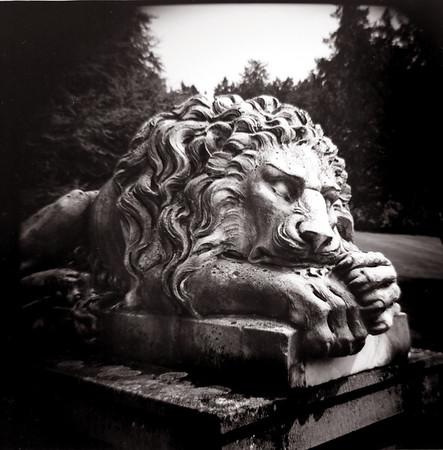 Lion, Royal Roads University, Victoria BC. 2014.