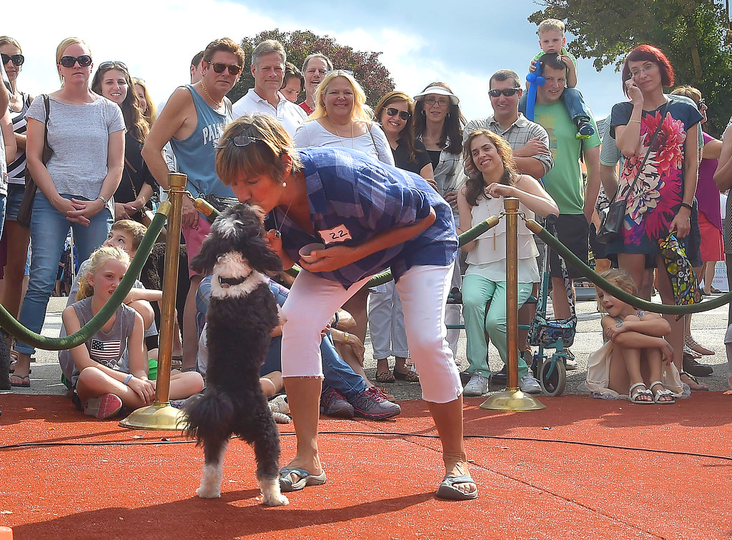 . PETE  BANNAN-DIGITAL FIRST MEDIA      Becca Lieb of Wayne gets a kiss from Taz her Australian Sheep poodle at the Wayne Fall Festival while enjoying the Top Dog contest Sunday. Taz won for best trick.