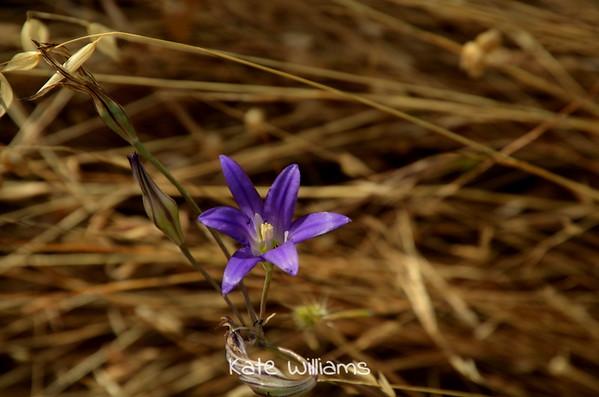 Wildflower 11x14