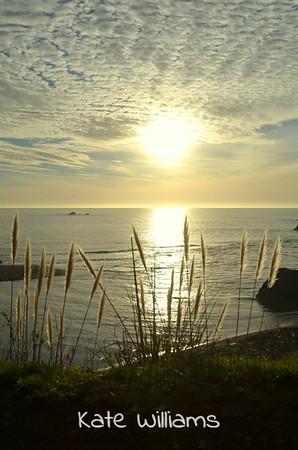 Coastal Shine