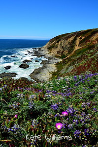 Bodega Head in Bloom