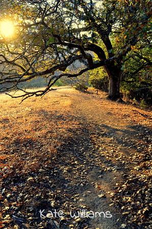 A Path to Walk