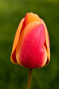 Golden Tulip   Vancouver, Washington