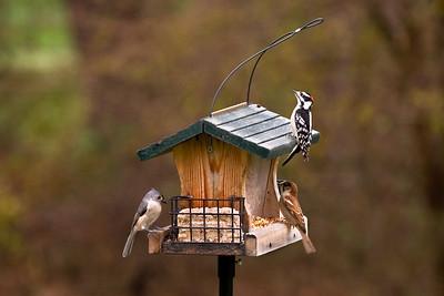 Sharing Food   Bel Air, Maryland