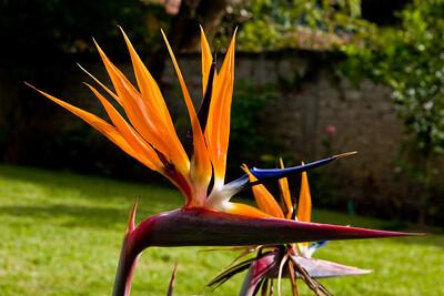 Sunlit Beauty   Ajijic, Mexico