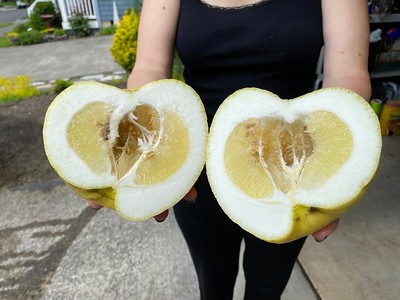 Lemon   Richmond CA
