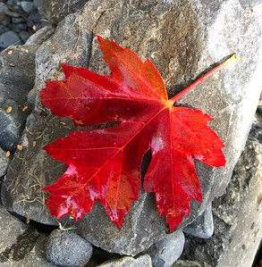 Fall Colors   Vancouver WA