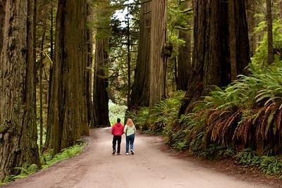 A Walk Among Giants 2   Redwoods of Northern California