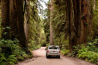 A Drive Among Giants   Redwoods of Northern California