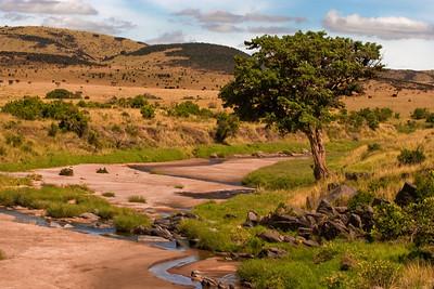 Beauty Around At Every Turn | Serengeti National Park; Tanzania