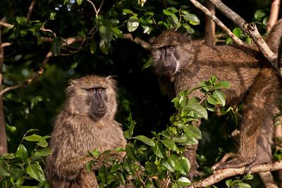 Keeping Eyes On Us | Serengeti National Park; Tanzania