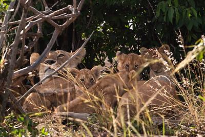 Watching Over The Kids | Serengeti National Park; Tanzania