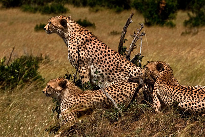 Sentinels of the Serengeti | Serengeti National Park; Tanzania