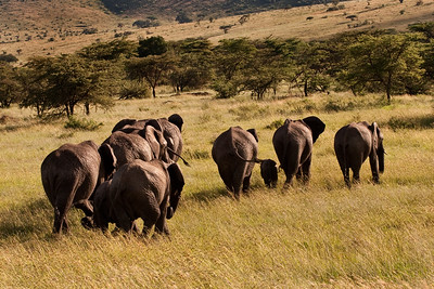 Heading On | Serengeti National Park; Tanzania (Photo courtesy of Julie Crites)