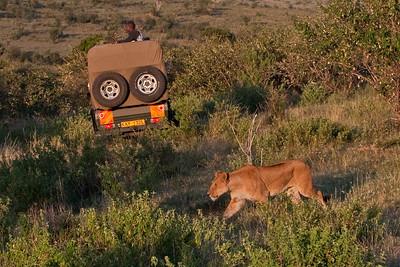 Unnoticed | Serengeti National Park; Tanzania