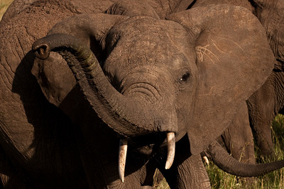 Up Close | Serengeti National Park; Tanzania