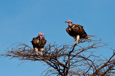 Tree Top Observers | Serengeti National Park; Tanzania