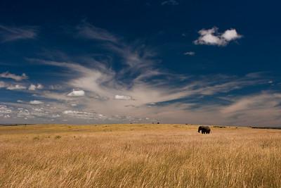 Lonely Traveler | Serengeti National Park; Tanzania