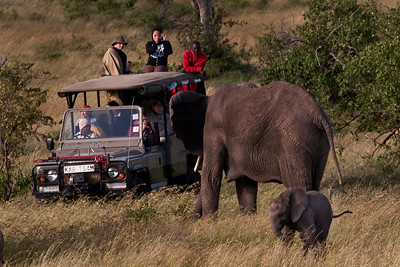 Be Very Careful, You In The Truck | Serengeti National Park; Tanzania