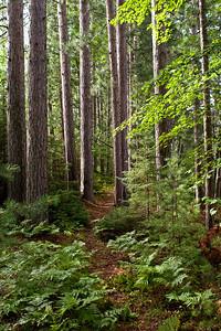 Trail Through Forest 1 | Along shoreline