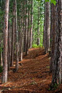 Trail Through Forest 2 | Along shoreline
