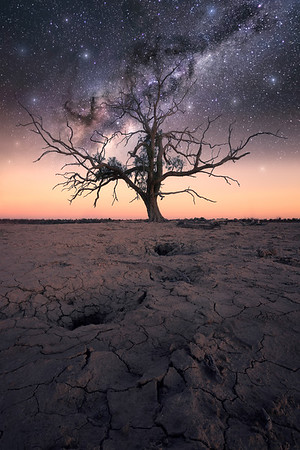 Dancing Tree III