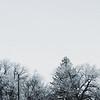TREE TOPS - MONTANA