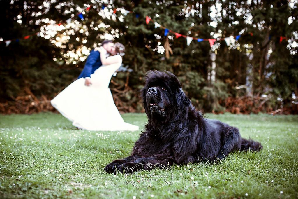 Lucy & Steve wedding 2015