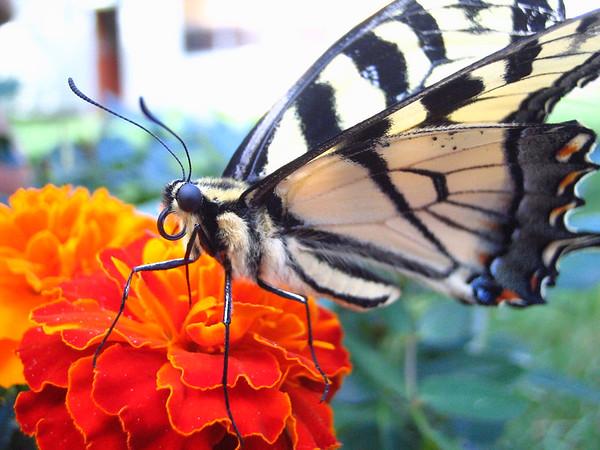 Butterfly Photos - June 2006