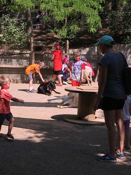 Henry - Zoo Field Trip