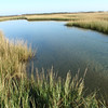 Great Pond marsh, Photo taken by Jim Turek