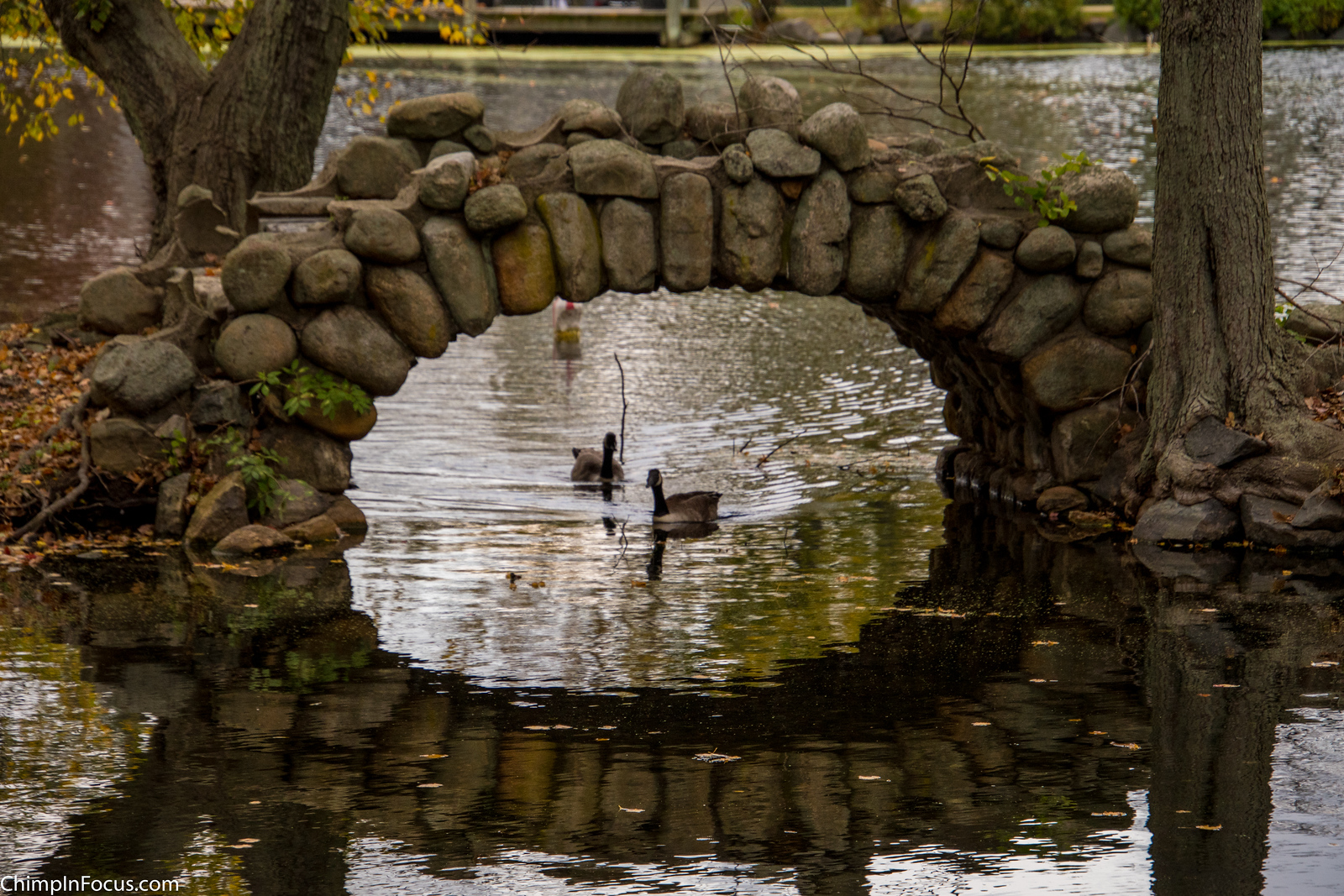 Arch Reflection