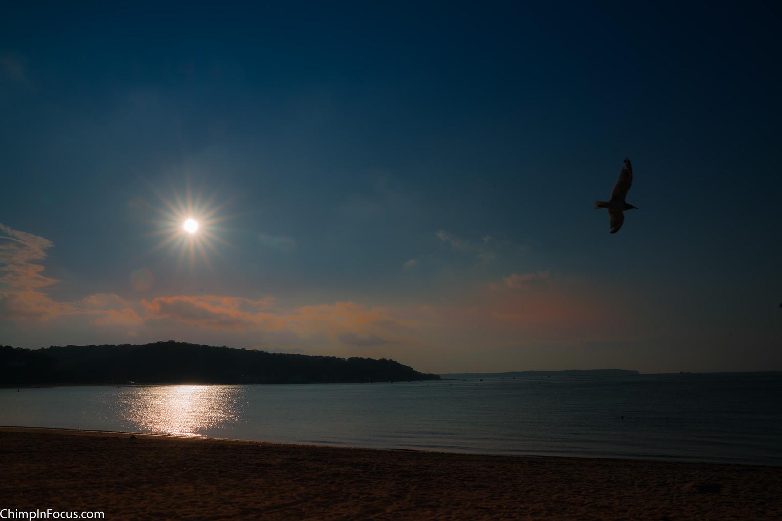 En-Gull-fd Sunset